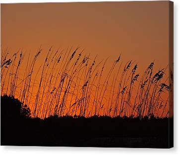 Harvest Sky And Sea Oats Canvas Print by Eve Spring