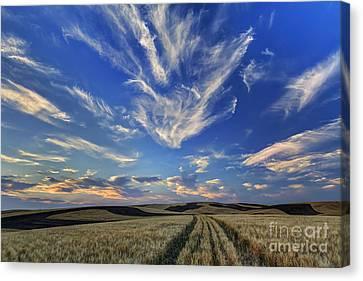 Harvest Sky Canvas Print by Mark Kiver
