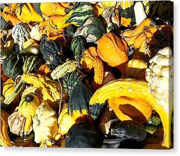 Harvest Squash Canvas Print by Caryl J Bohn