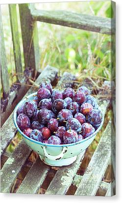 Harvested Plums Canvas Print
