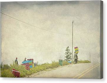 Harvesting Blueberries  Canvas Print by Betty  Pauwels