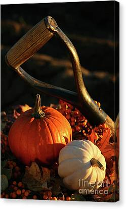 Harvesting For Thanksgiving Canvas Print by Sandra Cunningham