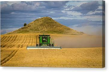 Harvesting Gold Canvas Print