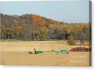 Harvesting Iowa Corn  Canvas Print