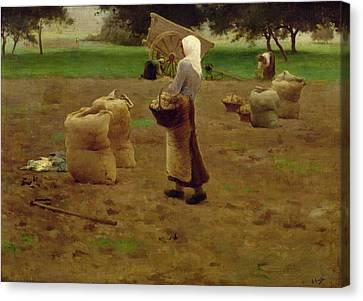 Harvesting Potatoes Oil On Canvas Canvas Print by Henri Lerolle