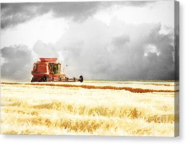 Harvesting The Grain Canvas Print