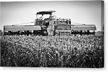 Canvas Print featuring the photograph Harvesting Time by Ricky L Jones