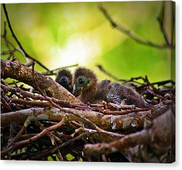 Canvas Print featuring the photograph Hoatzin Hatchlings In The Amazon by Henry Kowalski