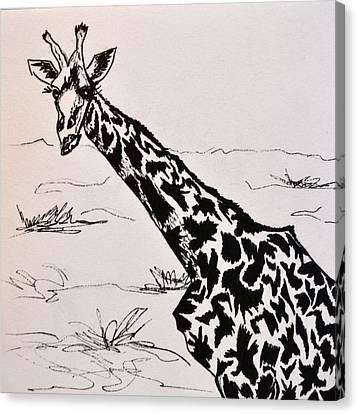 Haughty Canvas Print by Beverley Harper Tinsley