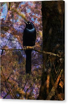 Canvas Print featuring the digital art Haunting Grackle by J Larry Walker