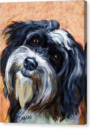 Havanese Dog Portrait Canvas Print by Dottie Dracos