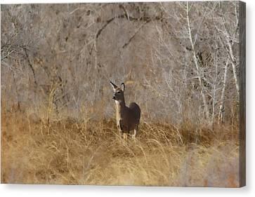 Fountain Creek Nature Center Canvas Print - Having A Look by Ernie Echols
