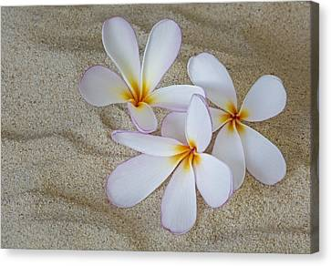 Sea Shell Canvas Print - Hawaiian Tropical Plumeria by Susan Candelario