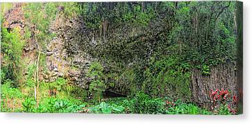 Hawaii Fern Grotto Canvas Print by C H Apperson