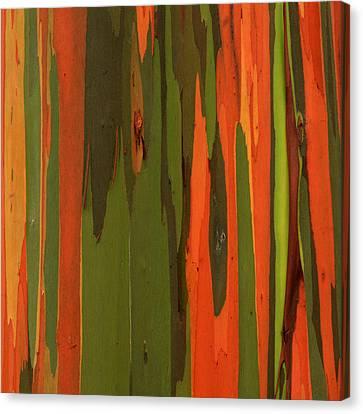 Hawaiian Eucalyptus Canvas Print by James Eddy