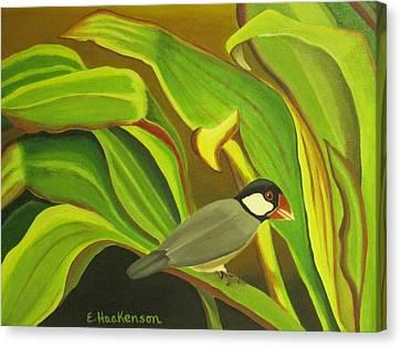 Hawaiian Finch On Tea Leaves Canvas Print by Elaine Haakenson