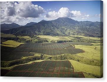 Hawaiian Pineapple Fields Canvas Print by Carol Highsmith