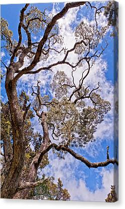 Canvas Print featuring the photograph Hawaiian Sky by Jim Thompson