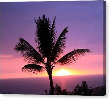 Hawaiian Sunset And Palm Canvas Print by Karen Nicholson