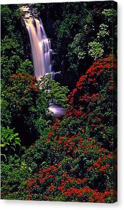 Hawaiian Waterfall With Tulip Trees Canvas Print