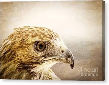 Hawk Canvas Print by Edward Fielding