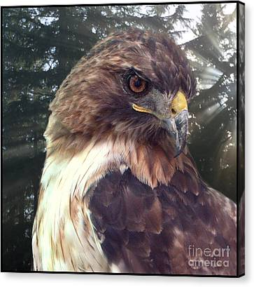 Hawk Eye - Wildlife Art Photography Canvas Print by Ella Kaye Dickey