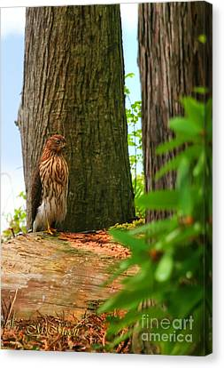 Hawk Eyes Canvas Print by Tap On Photo