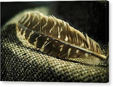 Hawk Feather  Canvas Print by Rebecca Sherman