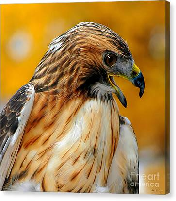 Hawk Hunt Canvas Print