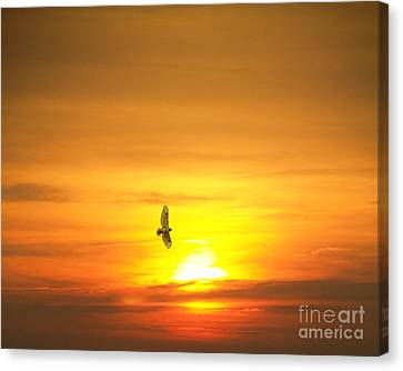 Hawk Into The Sunset Canvas Print