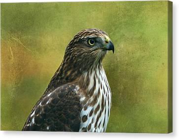 Hawk Portrait Canvas Print by Sandy Keeton