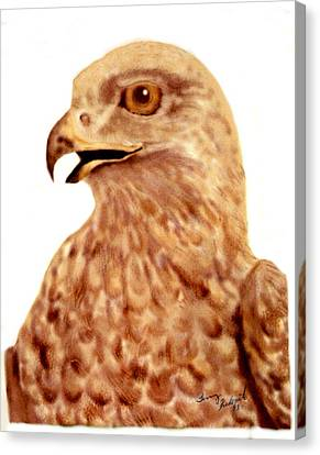 Canvas Print featuring the digital art Hawk by Terry Frederick