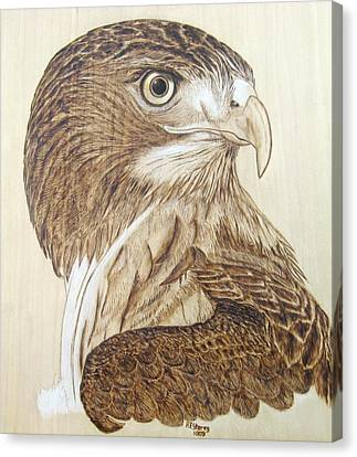 Canvas Print - Hawk Watch by Roger Storey