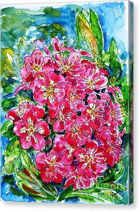 Hawthorn Blossom Canvas Print by Zaira Dzhaubaeva