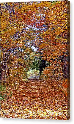 Hawthorn Hollow Canvas Print by Kay Novy