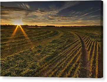 Hay And Sun Rays Canvas Print by Mark Kiver