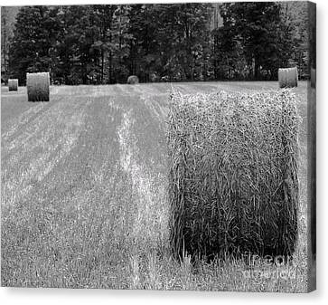Hay Baby Canvas Print by Jim Rossol