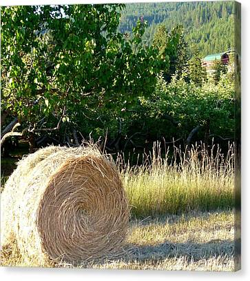 Hay Bale And Barn Canvas Print by Will Borden