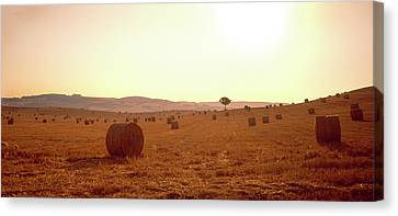 Hay Bales In A Field, Pienza, Siena Canvas Print by Panoramic Images