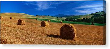 Hay Bales In A Field, Val Dorcia, Siena Canvas Print by Panoramic Images