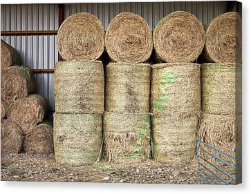Hay Bales Canvas Print by Tom Gowanlock