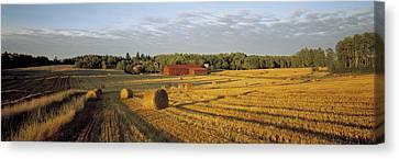 Hay Field Sweden Canvas Print