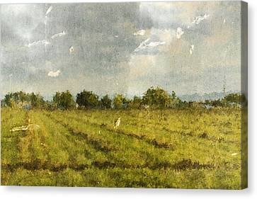 Hay Fields In September Canvas Print by Brett Pfister