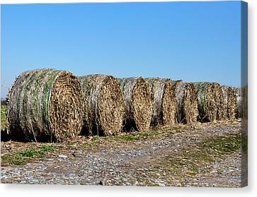 Hay Hay My My Canvas Print by Bill Cannon