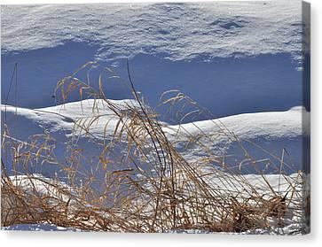 Hayfield In Winter Canvas Print by Gerald Hiam