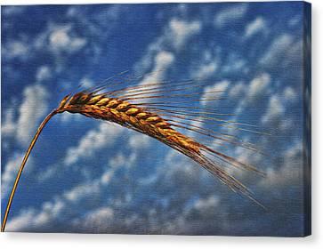 Haymaker Canvas Print by Graham Hawcroft pixsellpix