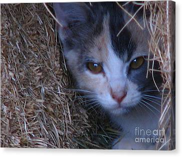 Haystack Cat Canvas Print by Greg Patzer