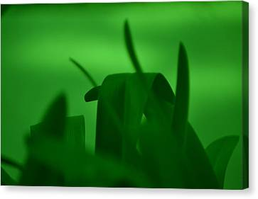 Haze Of Green Canvas Print by Kiros Berhane