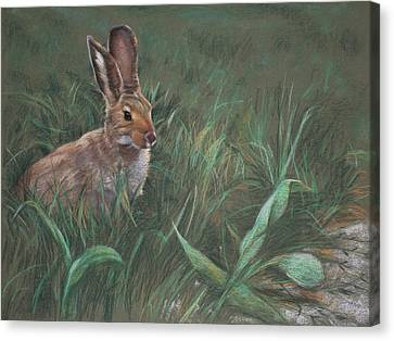 Hazel Canvas Print by Christopher Reid