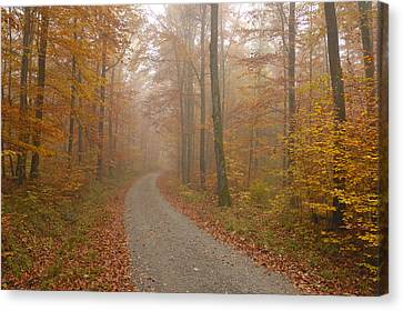 Hazy Forest In Autumn Canvas Print by Matthias Hauser